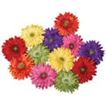 1325 - Flowers Background