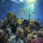 3893 - Underwater Background Gr