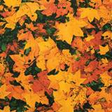 Patterned Flat Paper – Autumn Leaves