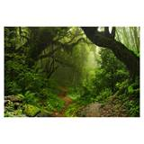 Photo Mural - Jungle Pathway
