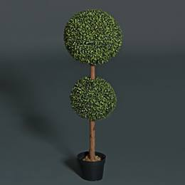 Boxwood Topiary Kit
