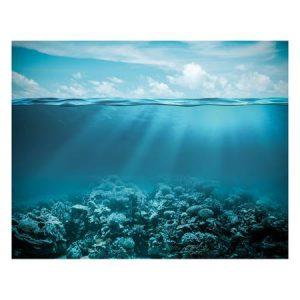 Under the Ocean Photo Mural