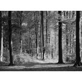 Mystical Forest Photo Wall Mural